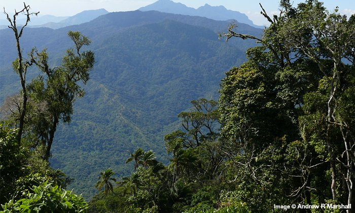 Protecting Magombera Nature Forest Reserve for generations to come