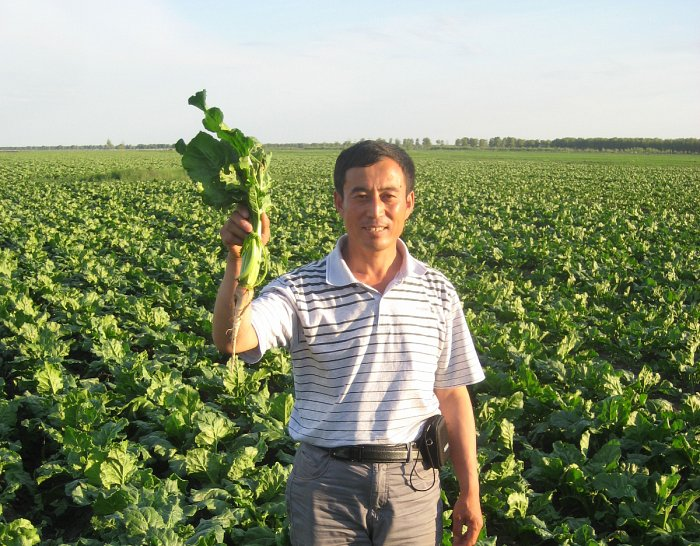 Embedding Sustainable Agriculture in China
